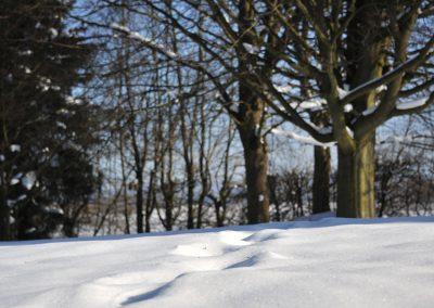 Prettiness_parkanlage_winter